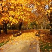 Осень золотая! :: Ирина Олехнович