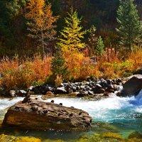 Осень :: Андрей Гомонов