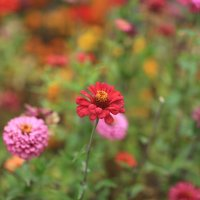 цветок :: Alima Назарова