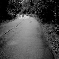 Дорога в лесу :: Григорий Кучушев