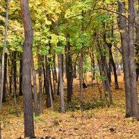 Осенний лес :: Павел Trump