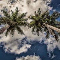 Карибы. :: Александр Вивчарик