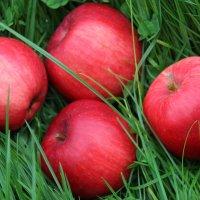 Осенние яблоки :: Mariya laimite