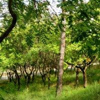Танцующий лес :: Наталья Джикидзе (Берёзина)