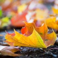 яркая осень :: Елена Добрейкина