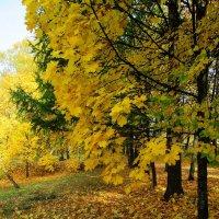 Осень золотая. :: Михаил Попов