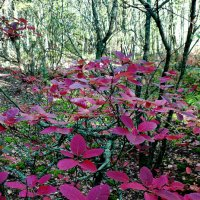 краски осеннего леса. :: Дмитрий Цымбалист