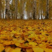Осенний ковер :: Роман Царев
