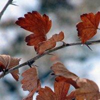 Осень. :: Оксана Н