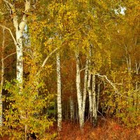 Пришёл октябрь.... :: galina tihonova