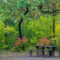 В лесу... :: Юрий Стародубцев