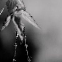 Крапивная птица :: Artem72 Ilin