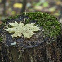 Осенний лист :: Эдуард Пиолий