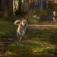 Собачья радость! :: Алёна Михеева