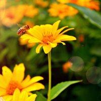 пчёлка-труженица :: Marina Khodakova