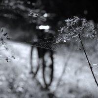 о нитях и спицах :: sv.kaschuk