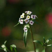 Белый цветочек :: Дмитрий Зубенин