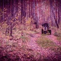 В осеннем лесу.... :: игорь козельцев