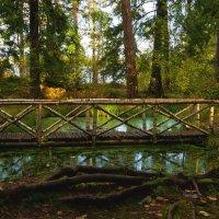 берёзовый мосток :: Ирэна Мазакина