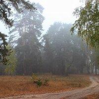 Осенних чувств туманная прохлада... :: Лесо-Вед (Баранов)