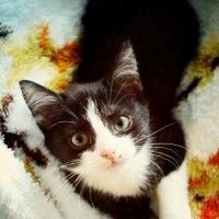 Кошка-малышка :: Ksenia Bahcha