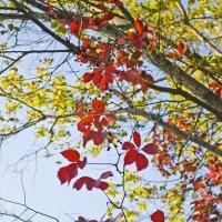 """... и подпись: """"Здесь была осень..."""" :: Наталья Костенко"""