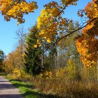 Осенний пейзаж :: Денис Матвеев