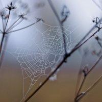 Осеннее макраме :: sorovey Sol