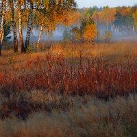 Подберёзовый туман... :: Roman Lunin