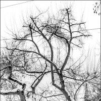 Спящие ДеревА. Фрагмент :: Олег Карташов