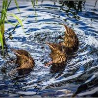 Синхронное плаванье. :: Фрол Фролов