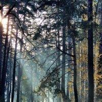 В лучах хрустальной тишины... :: Лесо-Вед (Баранов)
