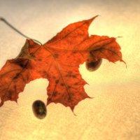 Осень :: Константин Вавшко