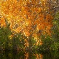 Осень на закате! :: Ольга Кондратова