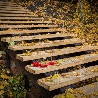 Осенние мотивы.... :: игорь козельцев