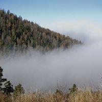 Туман в тайге . :: Виктор