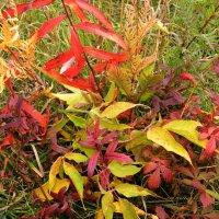 Яркие краски осени... :: ГАЛИНА ПРОХОРОВА