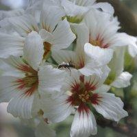 Муравей в поисках нектара... :: Барбара