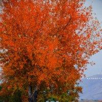 Осень :: Рамиль Искаков