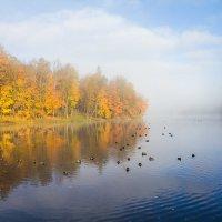 Туман над озером :: Сергей Залаутдинов