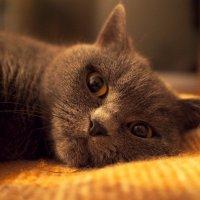 Тяжела кошачья жизнь... :: Татьяна