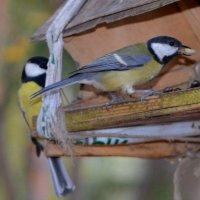 Птички-синички :: Savayr
