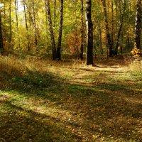 Осень, которая радует DSC09113 :: Андрей Лукьянов
