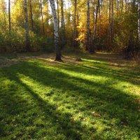 Осень, которая радует IMG_2236 :: Андрей Лукьянов