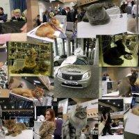 Выставка элитных кошек. :: Oleg4618 Шутченко