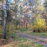 Лесные дороги . :: Мила Бовкун