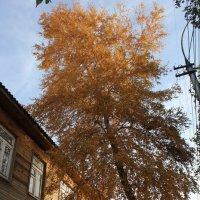 Осенние ласки :: Наталья Золотых-Сибирская