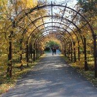 Осень в парке :: Наталья Золотых-Сибирская