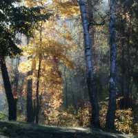 Рассвет в лесу :: Юрий Цыплятников