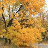 Золотая осень :: Григорий Капустин